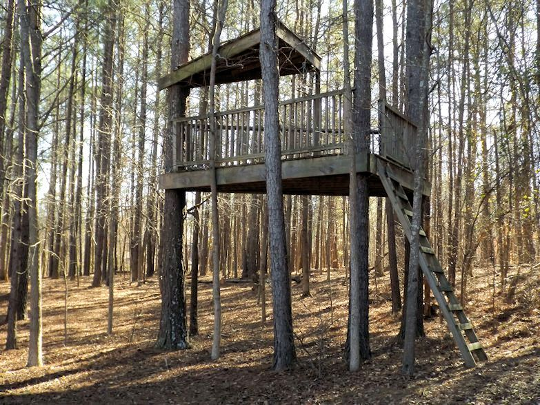 20_Tree House _Julie Murphy