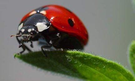 ladybug31114